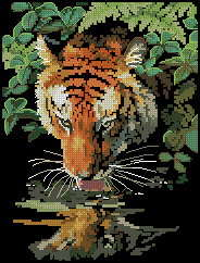 Dimensions_06961_Tiger_Reflection