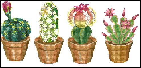 4 Cactuses 2