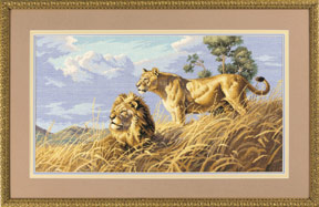 Dimensions03866 - African Lions