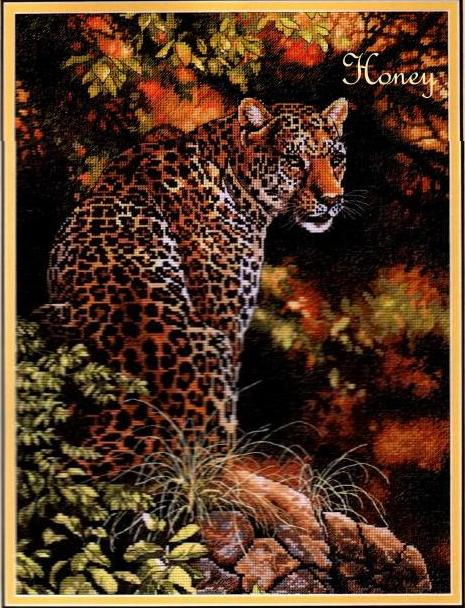 Dimensions35209_Leopards_Gaze