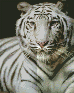 Jaenne Bonner White Tiger