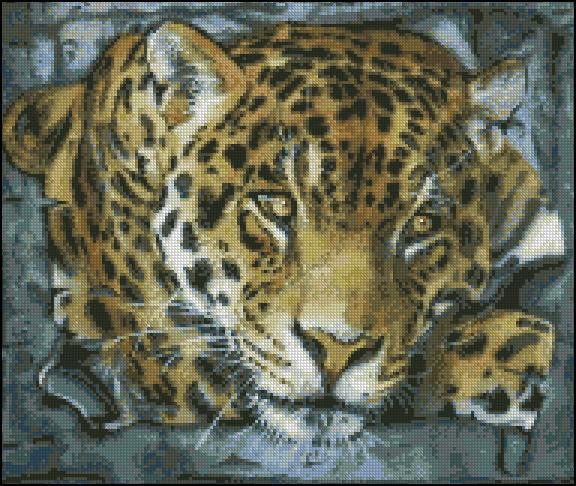 KK x Jaguar