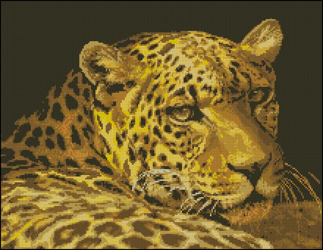 Leopard Portrait 5