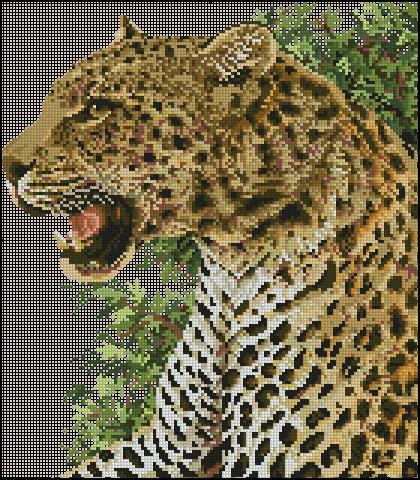 Leopard Portrait 6