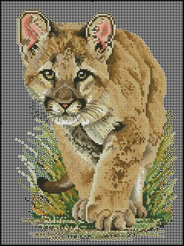 Puma cube