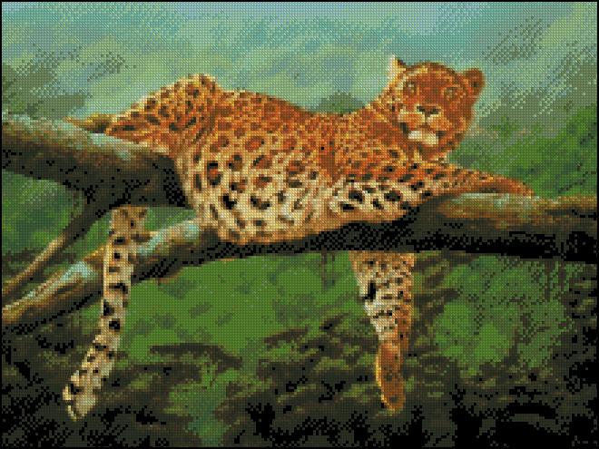 leopard na dereve