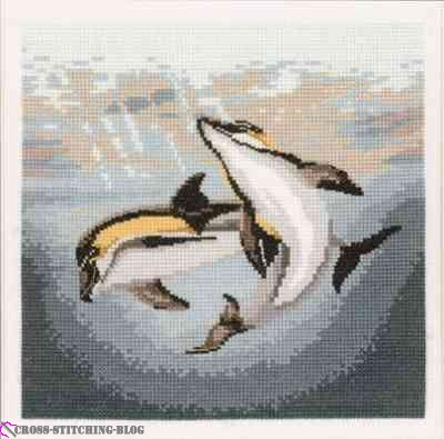 AMDD485-Dolphin_Duo