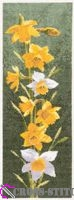 JCDF469_Daffodils