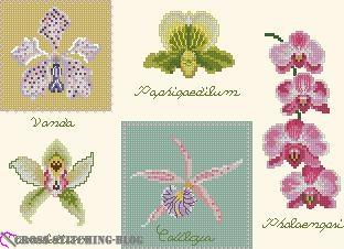 DMC Orchids